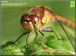 Animals - latest addition is a dragonfly gallery